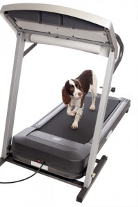 A dog on a treadmill?!